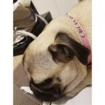 Kunstleder Hellrosa Halsband für Kleine Hunde mit Strass und Perlen