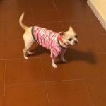 Rosa Tarnung T-shirt für Hunde