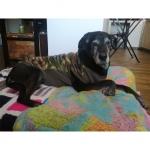 Jacke in Tarnfarbe Camouflage Grün für Große Hunde