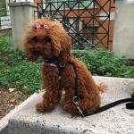 Sehr Weiches Hundegeschirr kleine Hunde in Tarnung Rosa Mesh