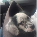 Günstige Tragetasche für Hunde in Farbe Grau
