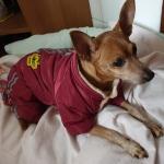 Winteranzug für Kleinen Hund Aviator Rot