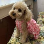 Rosa Sommerkleid für Hunde mit Rüschen