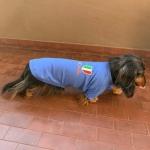 Italien T-Shirt für Dackel