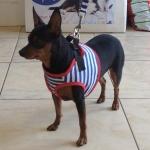 Seemann Harness für Hunde