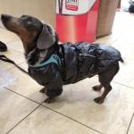 Wintermantel Hunde in Schwarz mit Innenseite aus Fleece