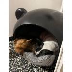 Schwarz Hundehöhle für Hunde 6-12Kg mit Rotem Tartan Kissen