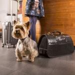 Elegant Hundetragetasche in Schwarz