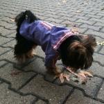 Violett Regenmäntel für kleine Hunde