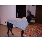 Grau Hoodie für Große Hunde