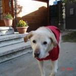 Rot Hoodie für Große Hunde