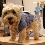 Blue Tartan Coat for Small Dogs