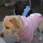 Rosa Hoodie für Große Hunde