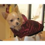 Kardinalrote Hund Jacke mit Kapuze
