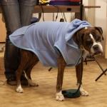 Hellblau Fleecepullover für große Hunde