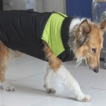 Green Sleeveless Jacket for large size dogs