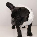 Elegantes Hochzeitskleid für Hunde