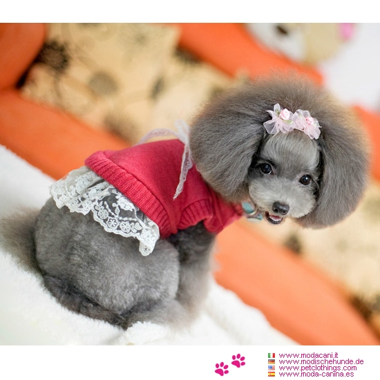 rot pullover mit spitze f r kleine hunde chihuahua bichon pudel. Black Bedroom Furniture Sets. Home Design Ideas