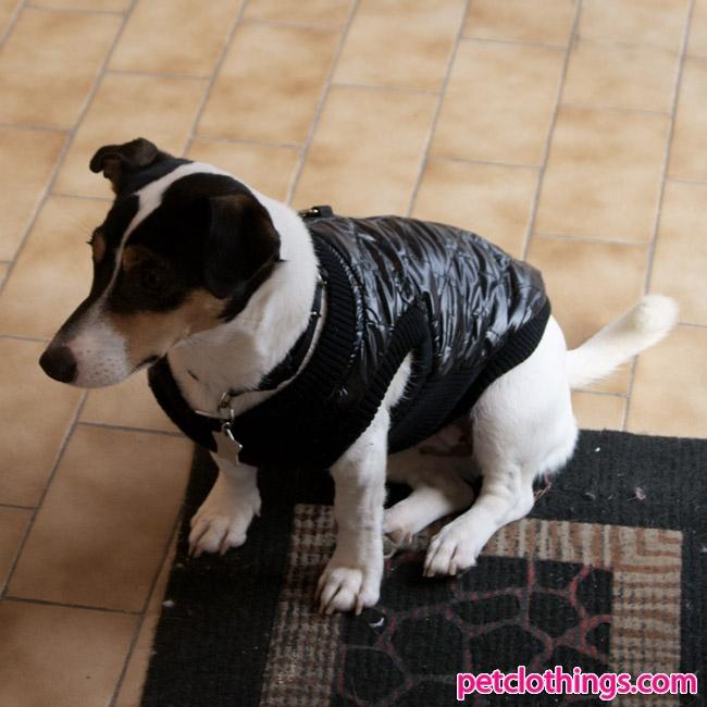 russel jack per cani Abbigliamento jack cani Abbigliamento per russel Abbigliamento per 5PwB6qUX