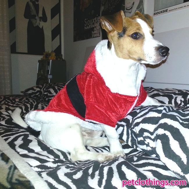 Foto Di Cani Vestiti Da Babbo Natale.Cappottino Per Cani Come Il Vestito Di Babbo Natale