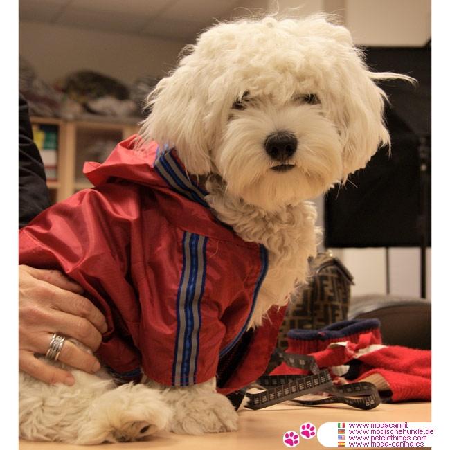Impermeabile Rosso Per Cani Piccola E Media Taglia Dal Chihuahua Al