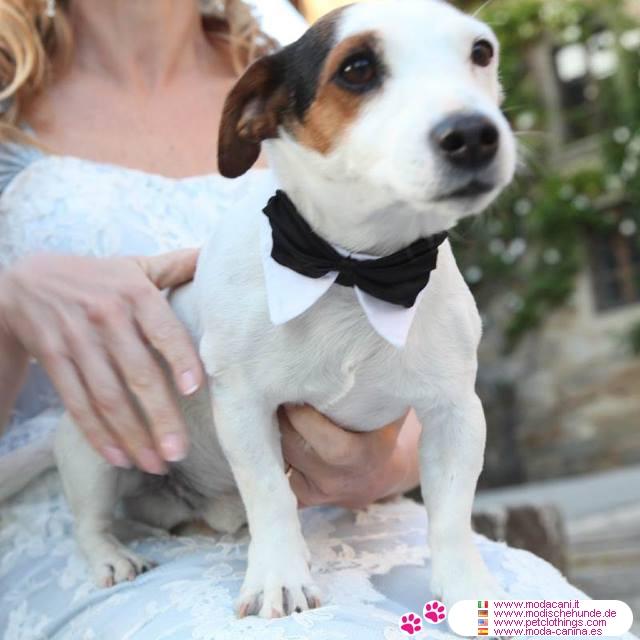 Matrimonio In Nero E Bianco : Farfallino o papillon per cani accessorio matrimonio cane