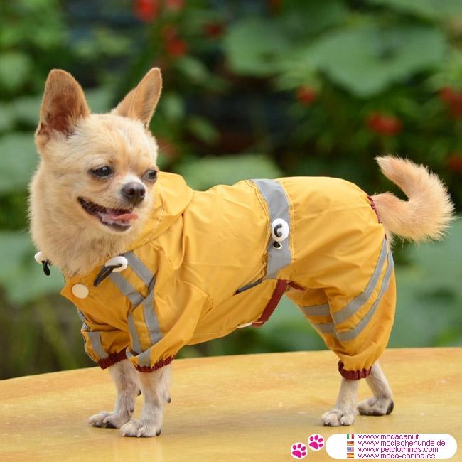 Small Dog Yellow Raincoat