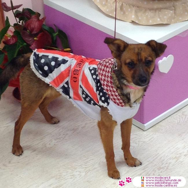 manteau pour chien avec drapeau anglais