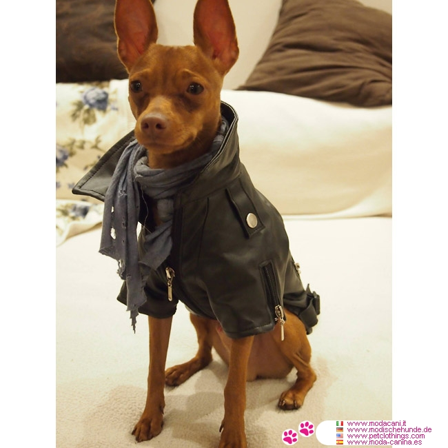 Faux Leather Black Jacket For Dogs Shipping To Usa And Canada