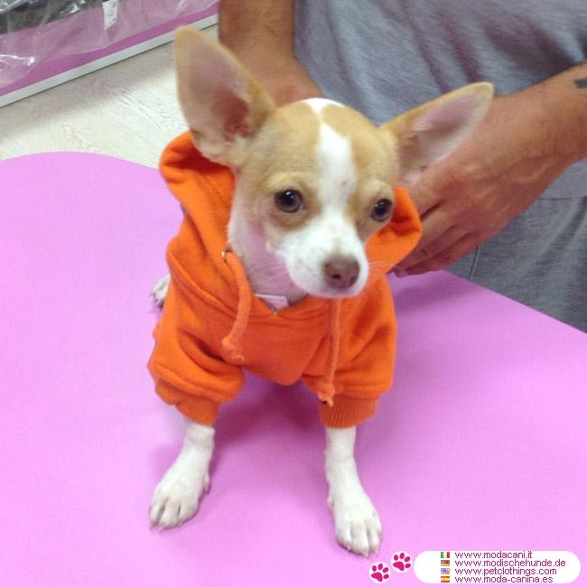 Big Dog Wearing Sweater Bright Orange Dog Swea...