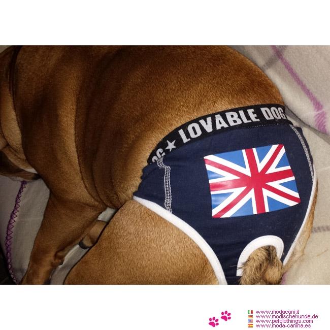 culotte bleu pour chiens avec drapeau anglais