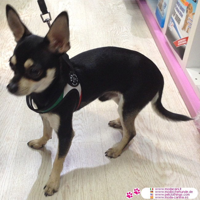 5274318527 in addition Odyssee Windhondenjas as well Thundershirt moreover Harnais Petit Chiens Avec Cordon Drapeau Italien additionally 18858892164407006. on dog harness