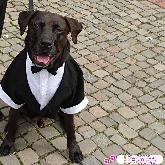 frac noir pour chiens de grande taille robe de mariage pour boxer berger allemand. Black Bedroom Furniture Sets. Home Design Ideas