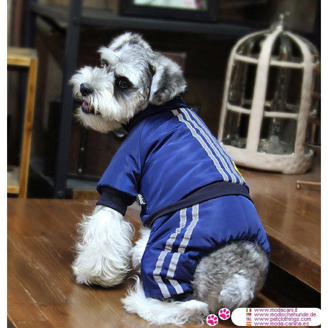 Blue Aviator Winter Suit For Small Dog Chihuahua Poodle