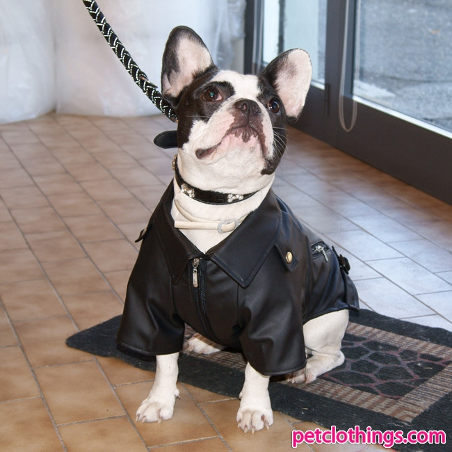 Faux Leather Black Jacket For Dogs