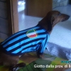Inter T-Shirts for Dogs