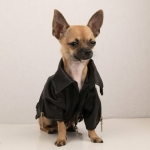 Giubbotto per cani modello Chiodo in Nero