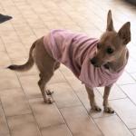 Sudadera Aterciopelada Violeta para Perros Pequeños
