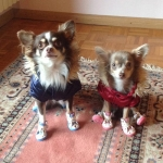 Cardinal Red Jacket for Dogs