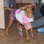Vestido de invierno Rosa y Blanco para perras con falda