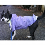 Lilac Raincoat for Large Dogs