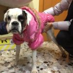 Chaquetón Acolchado Rosa para perros grandes