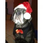 Corbata de lazo Rojo y Negro para Perro Grande