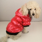 Dog Bomber Jacket in Red
