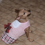 Dress for Little Dogs London Chic