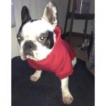 Felpa Rossa per Cani