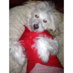 Plain Red Parka for dogs