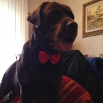 Farfallino Rosso per Cani grandi