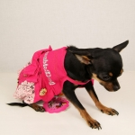 Romantic Dress in Pink color for Small Dogs
