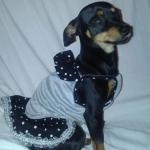 Minnie Dog Dress in Grey